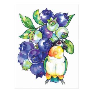 Black Head Caique with Blueberry Postcard