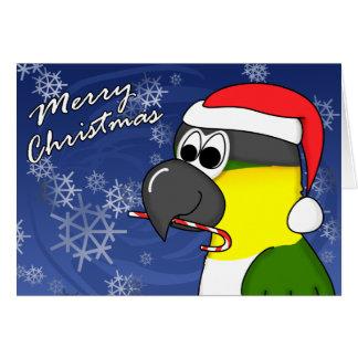 Black Headed Caique Christmas Card
