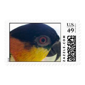 Black Headed Caique Stamp
