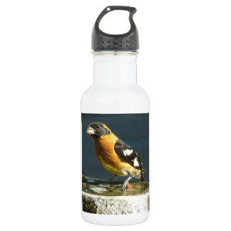 Black Headed Grosbeak Bird Reusable Bottle 18oz Water Bottle