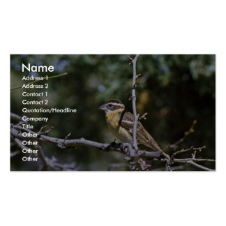 Black-headed grosbeak perched on tree limb Double-Sided standard business cards (Pack of 100)