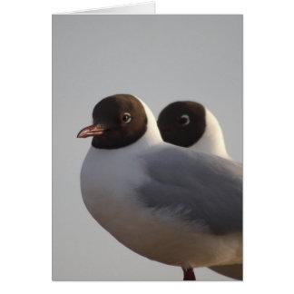 black-headed gull greeting card