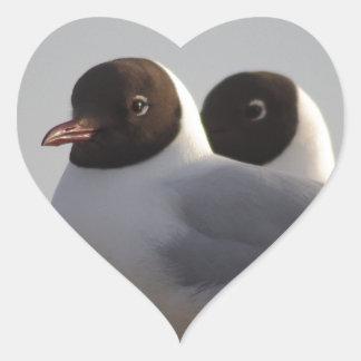 black-headed gull heart sticker
