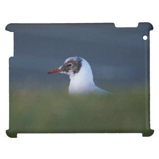 Black-headed Gull iPad Cover