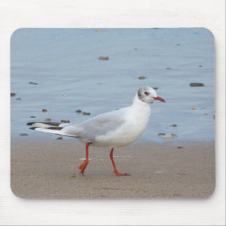 Black headed gull (juvenile) mouse pad