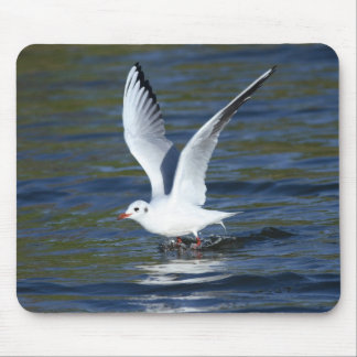 Black-headed Gull Mouse Pad