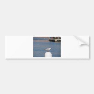 Black-headed gull perched on post calling bumper sticker