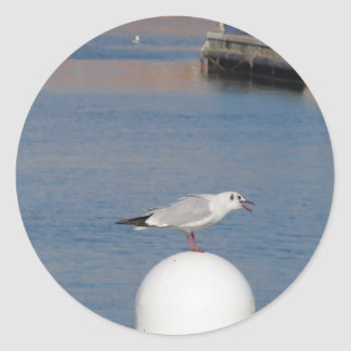 Black-headed gull perched on post calling classic round sticker