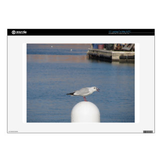 "Black-headed gull perched on post calling decal for 15"" laptop"