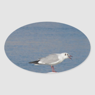 Black-headed gull perched on post calling oval sticker