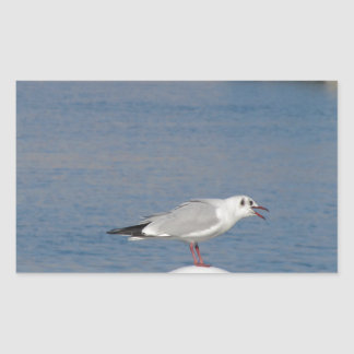 Black-headed gull perched on post calling rectangular sticker