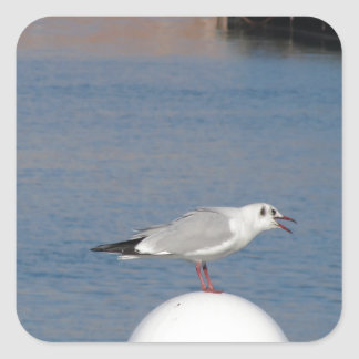 Black-headed gull perched on post calling square sticker