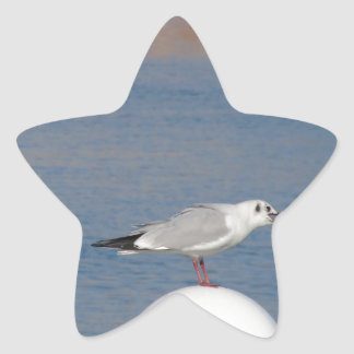 Black-headed gull perched on post calling star sticker