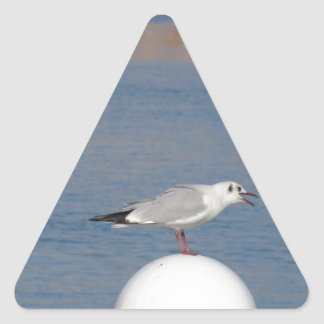 Black-headed gull perched on post calling triangle sticker