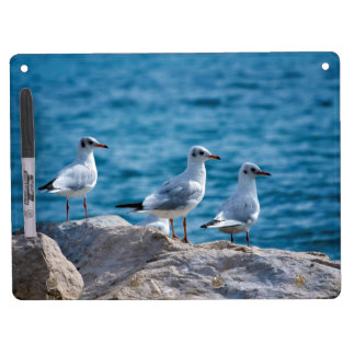 Black-headed gulls, chroicocephalus ridibundus dry erase board with keychain holder