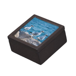 Black-headed gulls, chroicocephalus ridibundus keepsake box