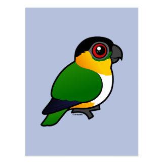 Black-headed Parrot Postcard