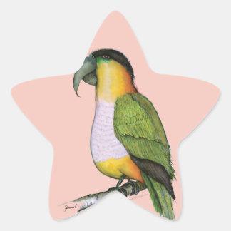 black headed parrot, tony fernandes star sticker