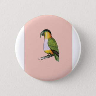 black headed parrot, tony fernandes.tif pinback button