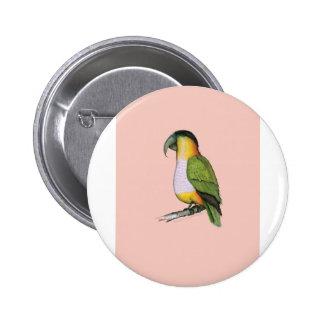 black headed parrot, tony fernandes.tif pinback button