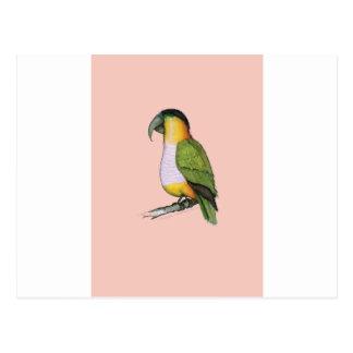 black headed parrot, tony fernandes.tif postcard