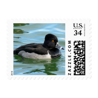 Black Headed Ring-necked sea diving duck Ringbill Postage Stamp