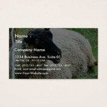 Black Headed Sheep On Grass Business Card