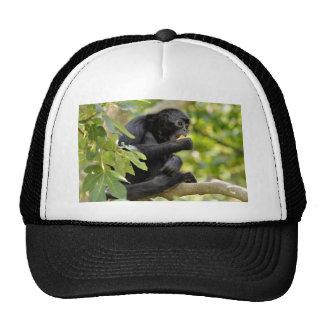Black-headed spider monkey in tree trucker hat