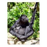 Black-headed spider monkey sitting on ground postcards