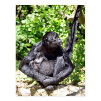 Black-headed spider monkey sitting on ground postcard