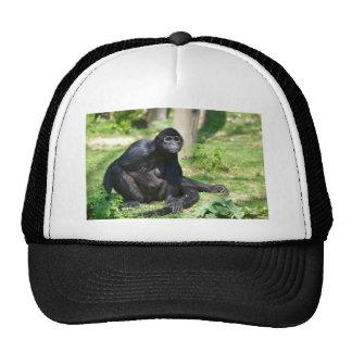 Black-headed spider monkey trucker hat