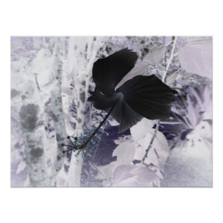 Black Hibiscus - Abstract Photography Poster