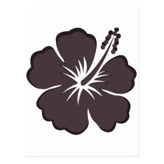 black hibiscus postcard