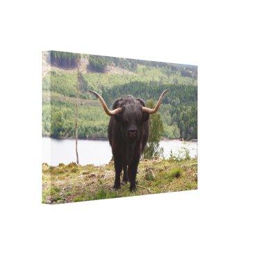 franwestphotography Black Highland cattle, Scotland Canvas Print