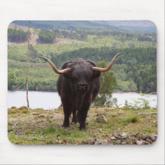 Black Highland cattle, Scotland Mouse Pad