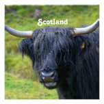 Black Highland Cow Personalized Announcement