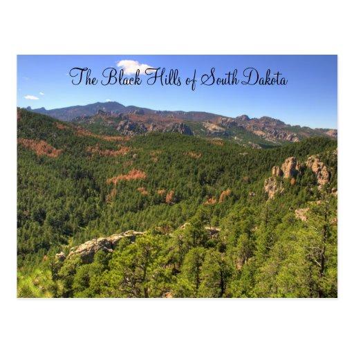 Black Hills South Dakota Postcard