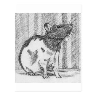 Black Hooded Fancy Rat Postcard