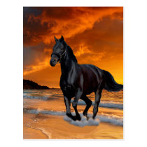 BLACK HORSE, BLACK STALLION, RUNNING AND FREE POSTCARD