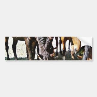 Black Horse Bumper Stickers