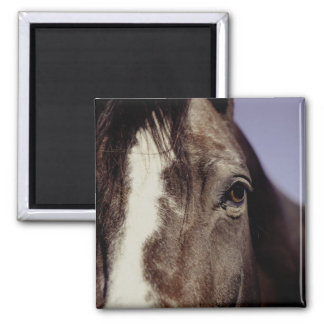 Black Horse Face with Eye Magnet