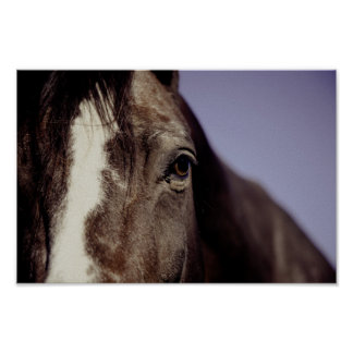 Black Horse Face with Eye Poster