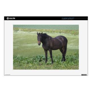 "Black Horse Grazing 15"" Laptop for Mac & PC Skins For Laptops"