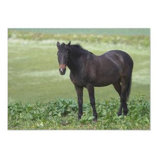 """Black Horse Grazing Invitation 5"""" X 7"""" Invitation Card"""