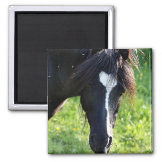 Black horse head with white stripe refrigerator magnet