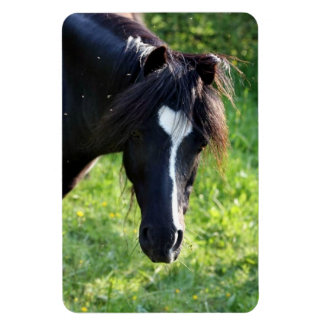 Black horse head with white stripe rectangular magnets