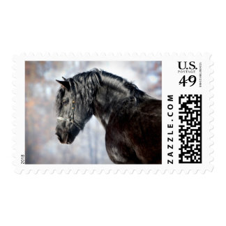 Black horse in forest postage