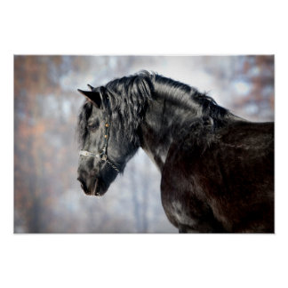 Black horse in forest poster