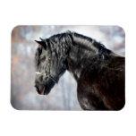 Black horse in forest rectangular photo magnet