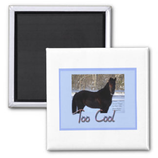 Black Horse in Snow: Too Cool Magnet